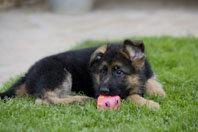 Los primeros meses del cachorro en casa