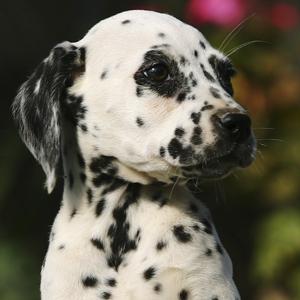 El cachorro: un perro seguro y autocontrolado