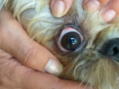 Lesiones oculares