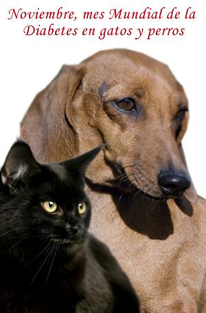 Noviembre, mes Mundial de la Diabetes en perros y gatos