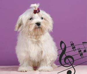El perro y la música