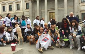 Los perros vuelven a tomar las calles de Madrid por quinto año consecutivo en la Sanperrestre
