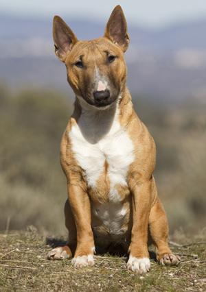 El cachorro: sin castigos, ni premios