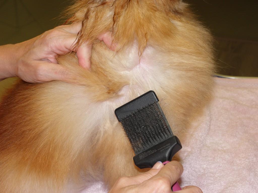 Porque no debe raparse a un perro malas pulgas vigo - Pulgas en casa sin animales ...