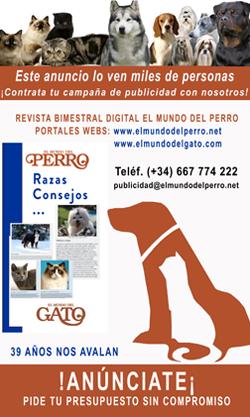 Calendario Perruno.Elmundodelperro Net Todo Sobre El Mundo De Los Perros Y Sus